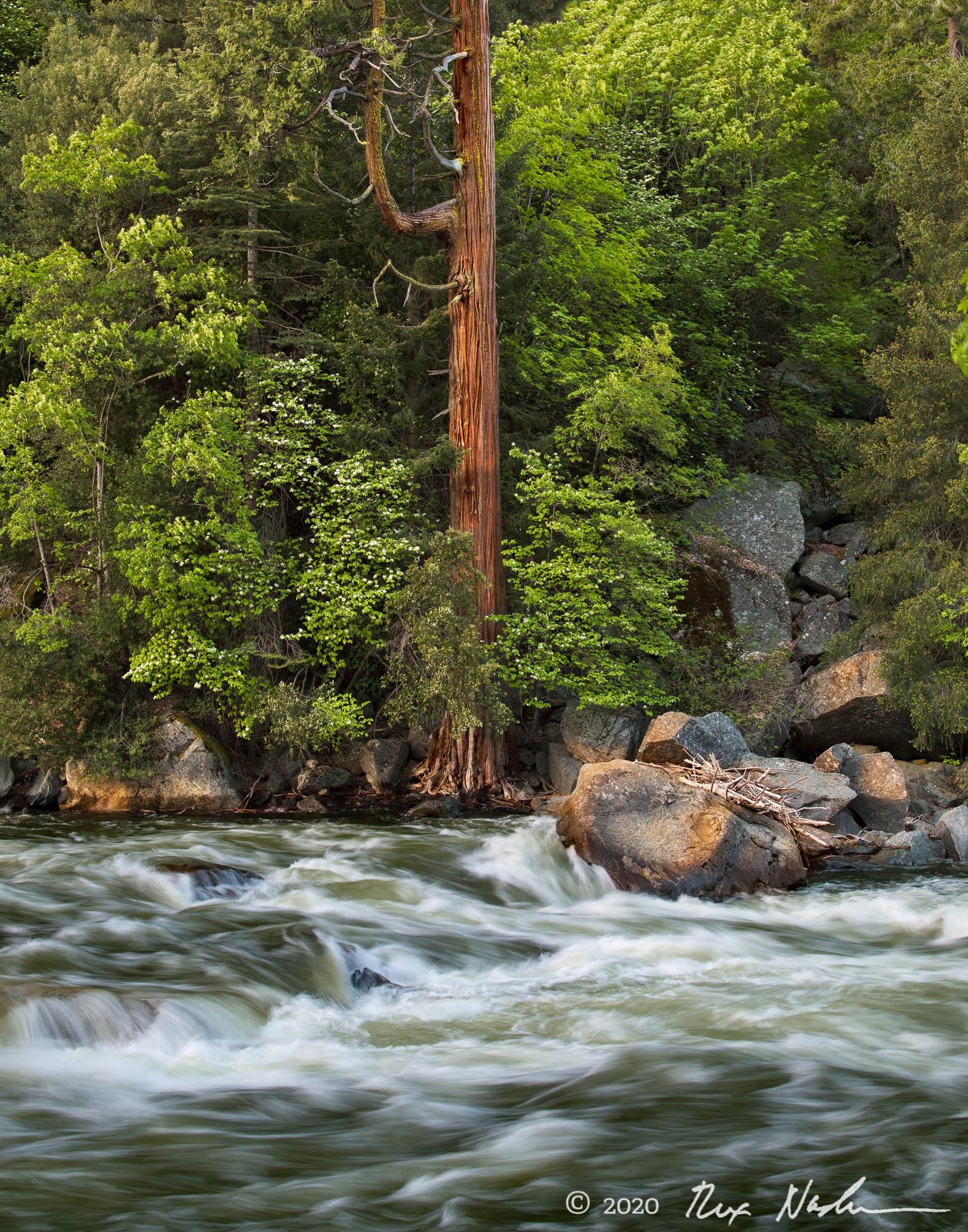 Guardian - Merced River, Yosemite