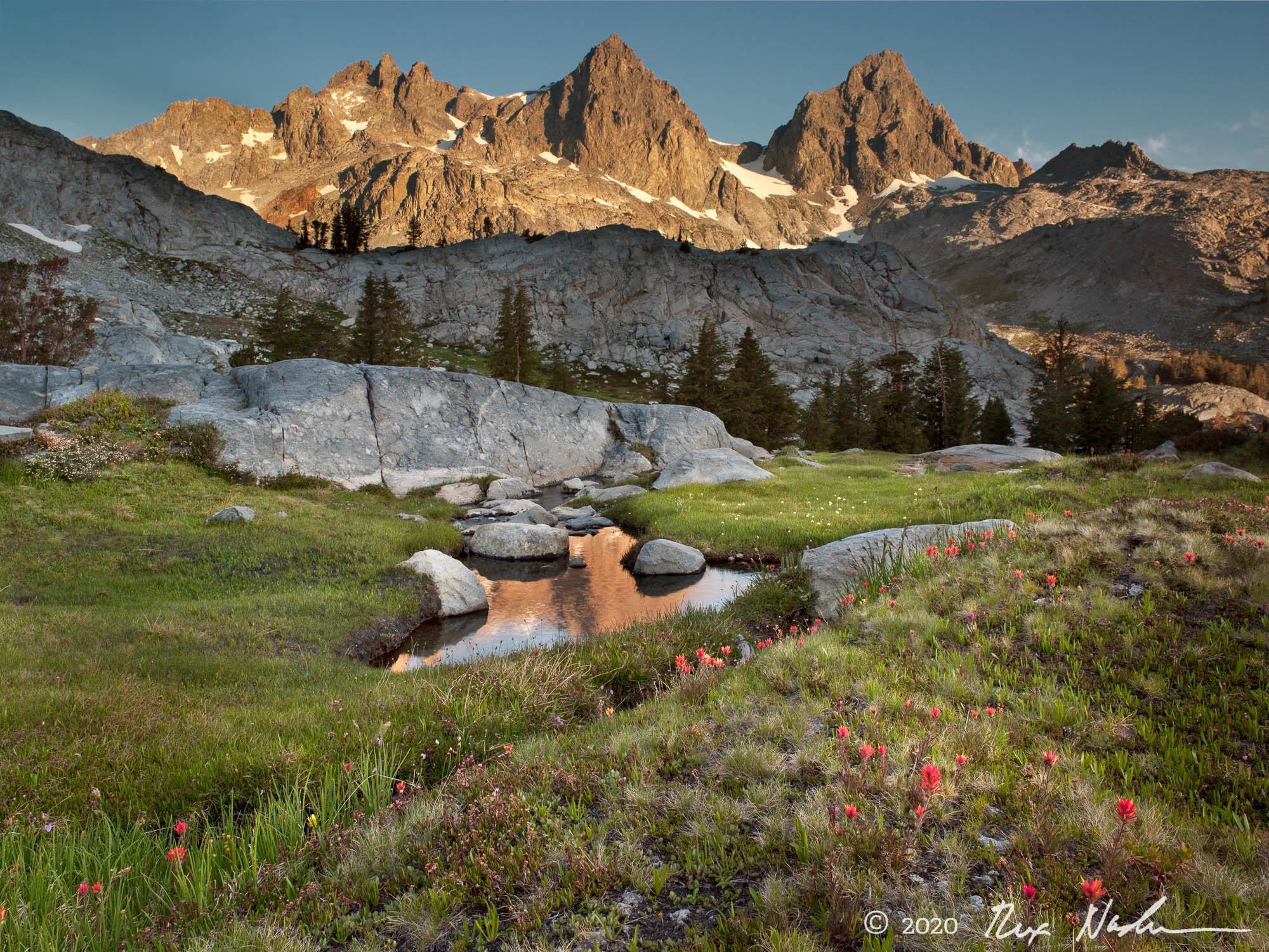 Meadow - High Sierra