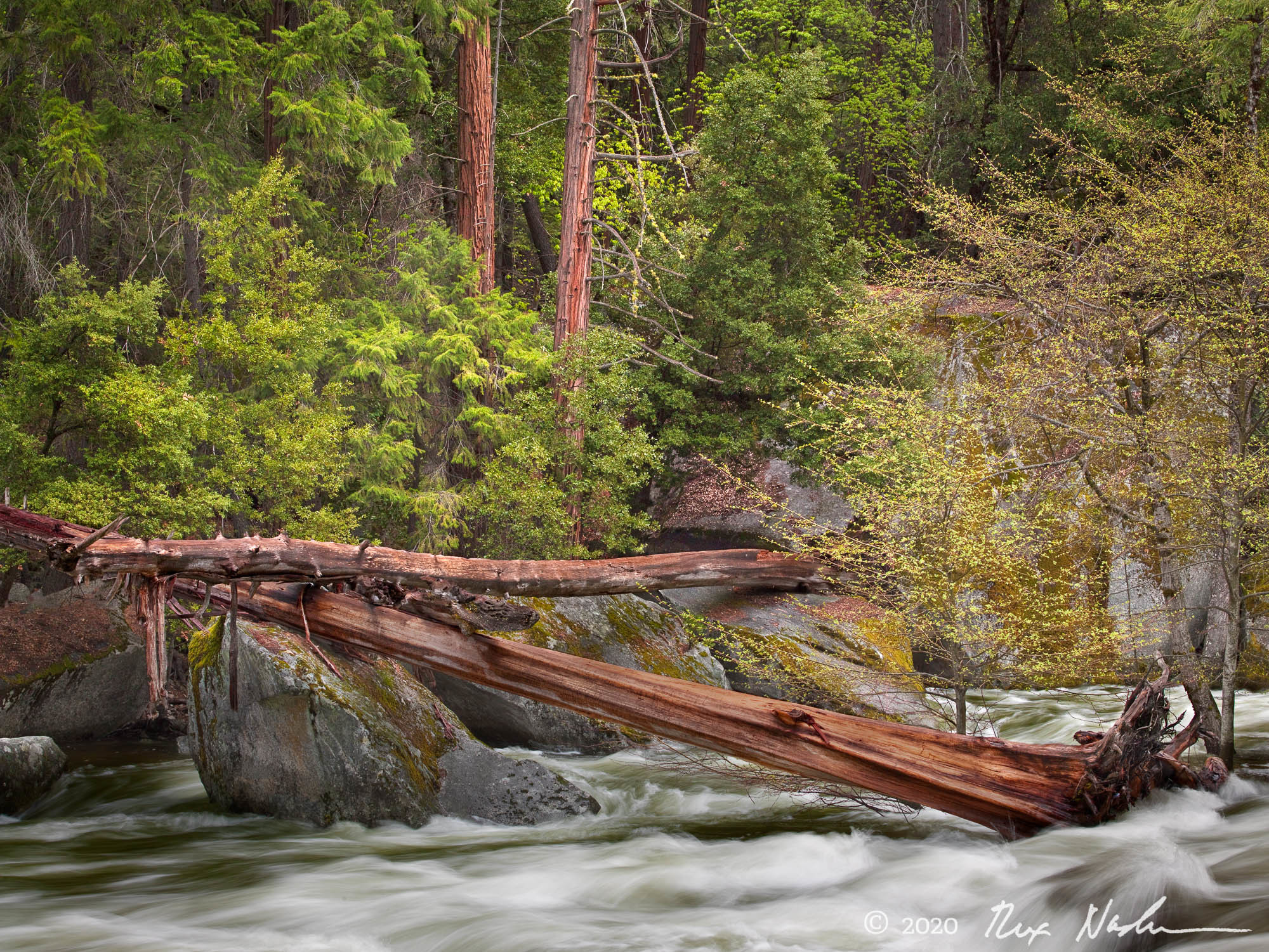 Realignment - Merced River, Yosemite