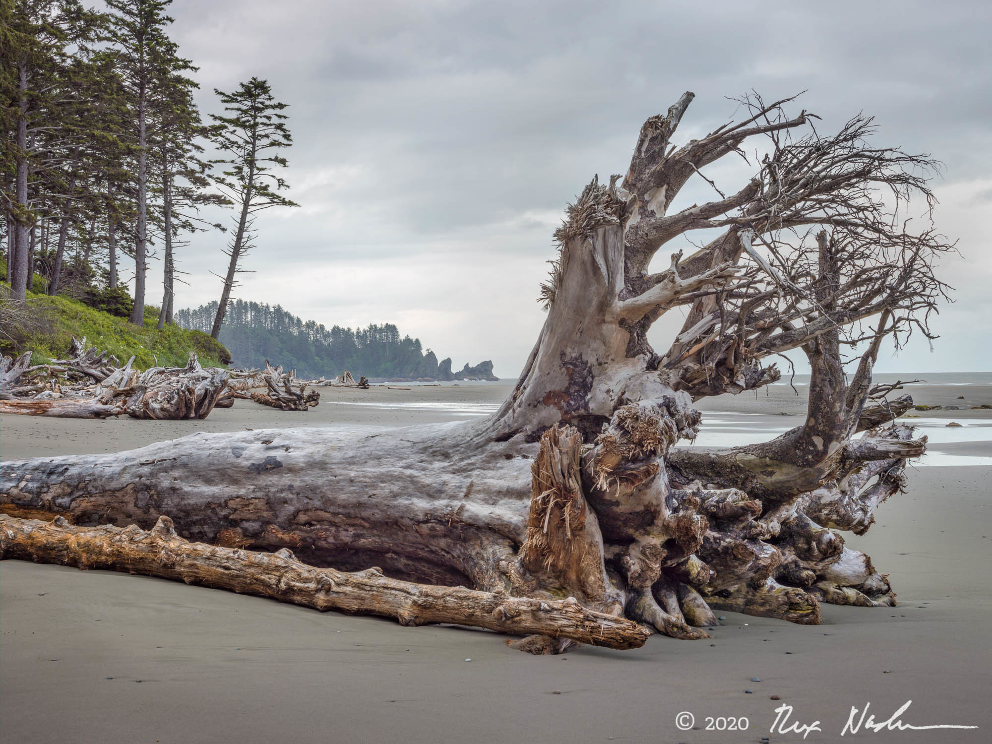 Giant - Olympic NP