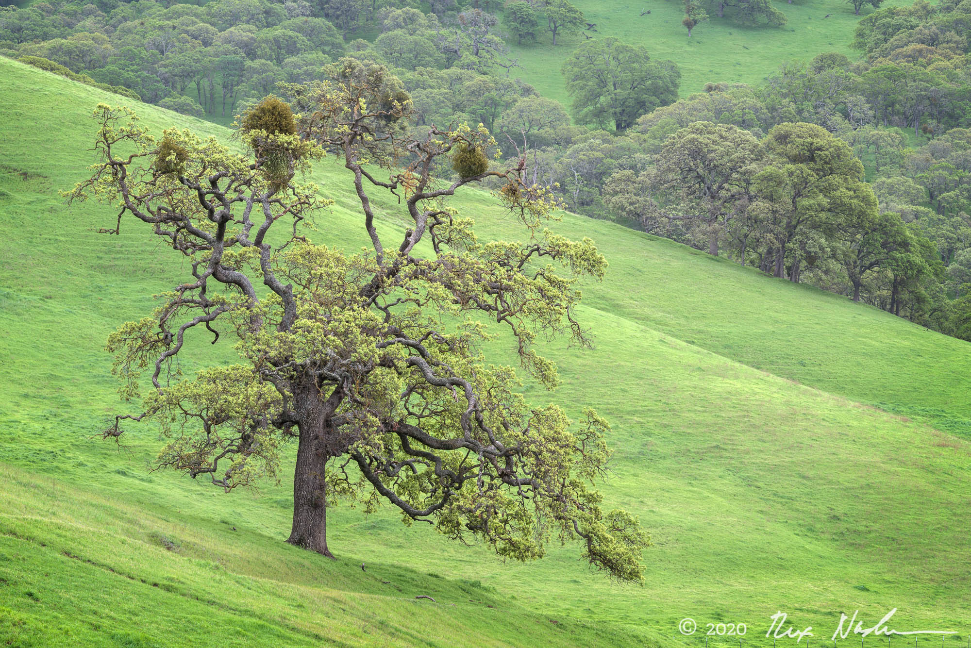 New Growth - Contra Costa County