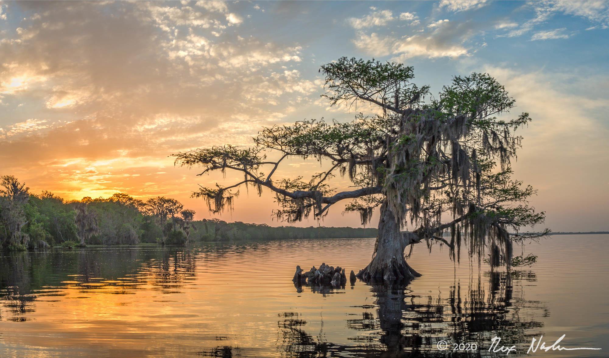 Tree of Life - Northern Florida