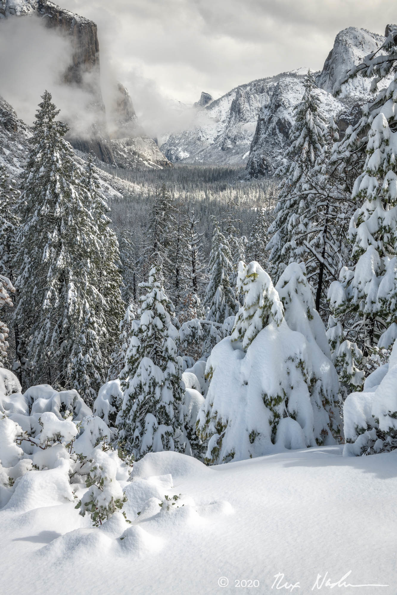Snow Trees with Valley - Yosemite NP