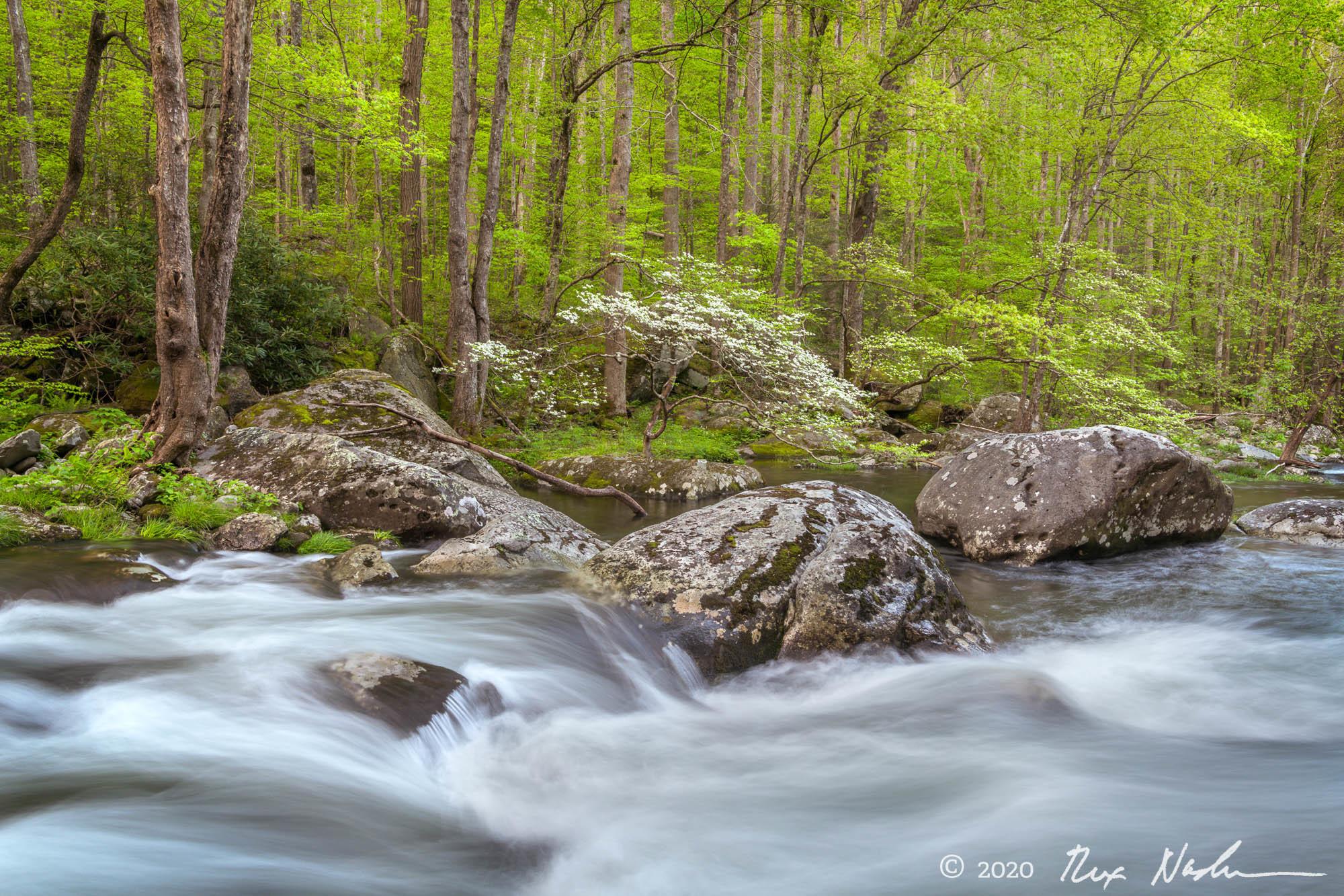 Bonsai - Great Smoky Mountains NP