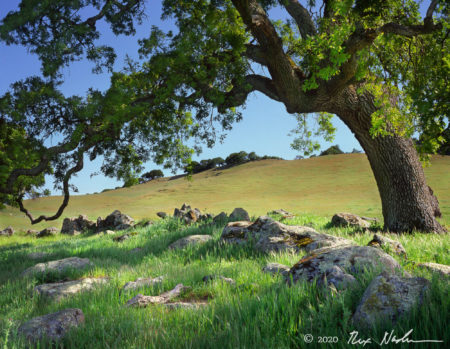 Oak and Wall